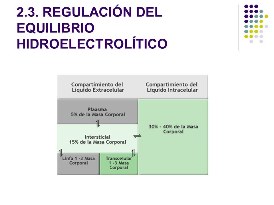 2.3. REGULACIÓN DEL EQUILIBRIO HIDROELECTROLÍTICO