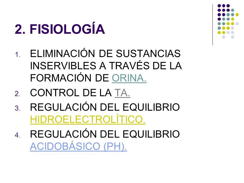 2. FISIOLOGÍA ELIMINACIÓN DE SUSTANCIAS INSERVIBLES A TRAVÉS DE LA FORMACIÓN DE ORINA. CONTROL DE LA TA.