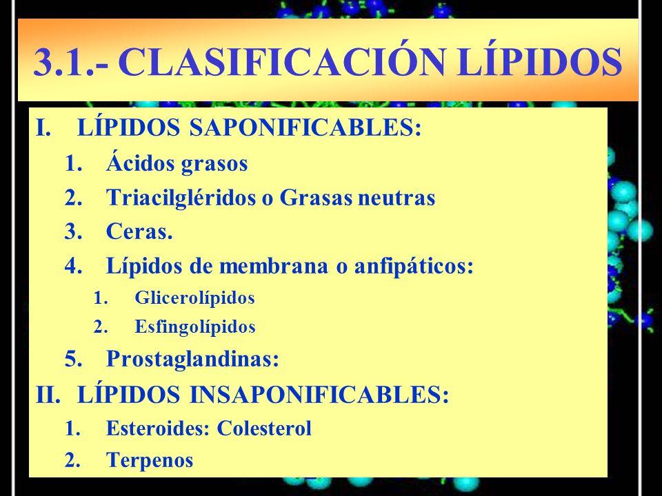 3.1.- CLASIFICACIÓN LÍPIDOS
