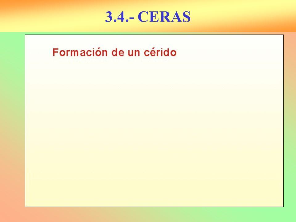 3.4.- CERAS