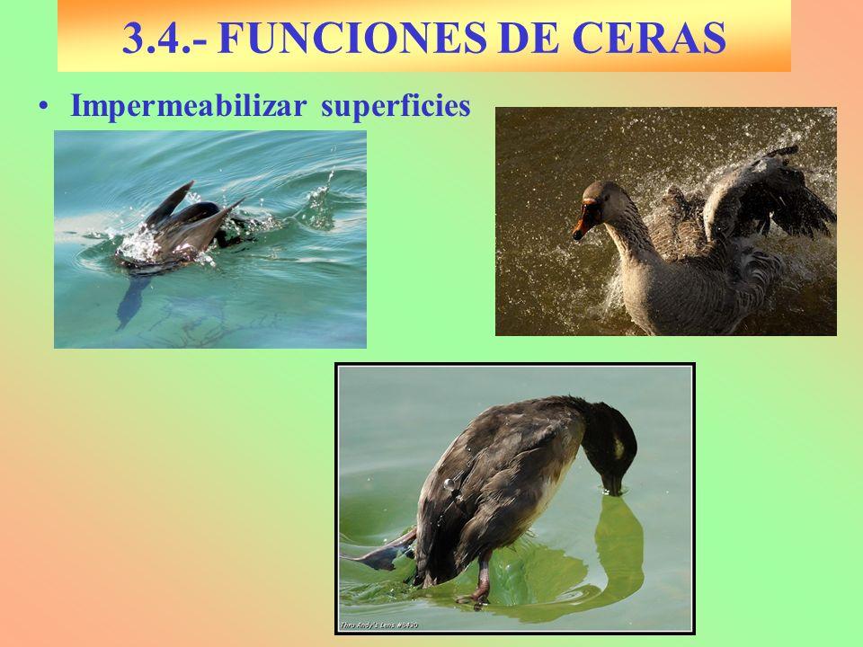 3.4.- FUNCIONES DE CERAS Impermeabilizar superficies