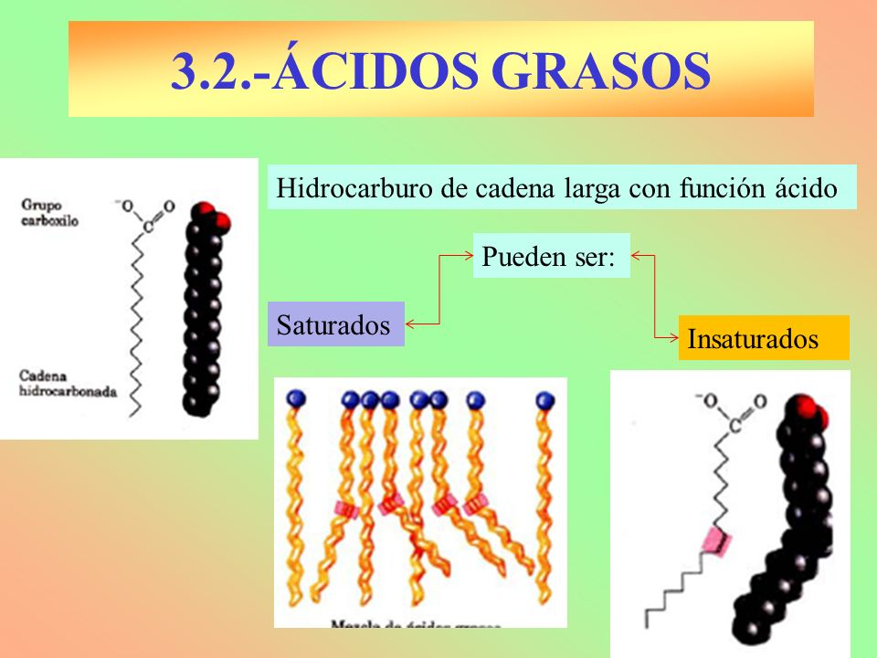 3.2.-ÁCIDOS GRASOS Hidrocarburo de cadena larga con función ácido