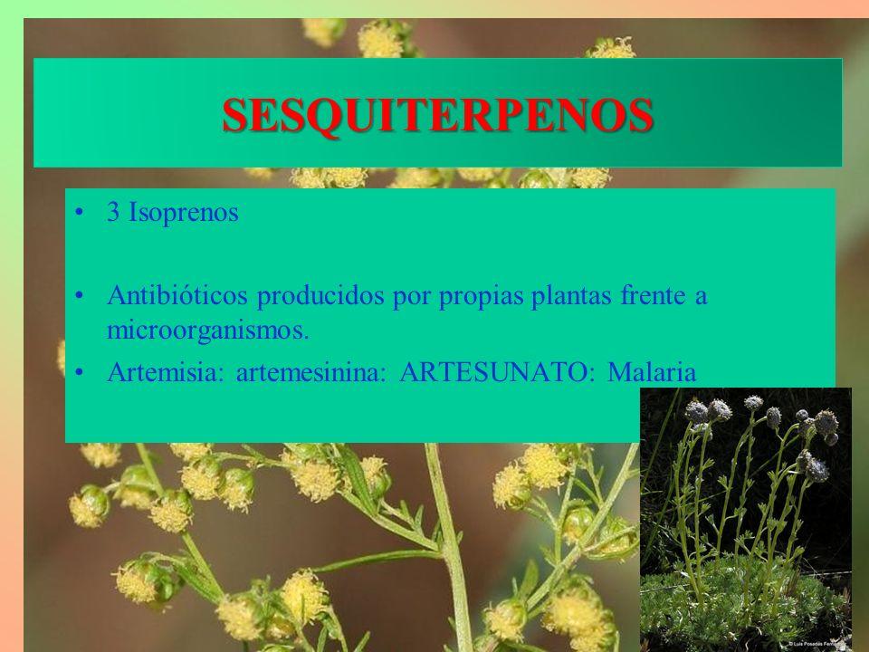 SESQUITERPENOS 3 Isoprenos