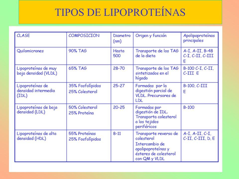 TIPOS DE LIPOPROTEÍNAS