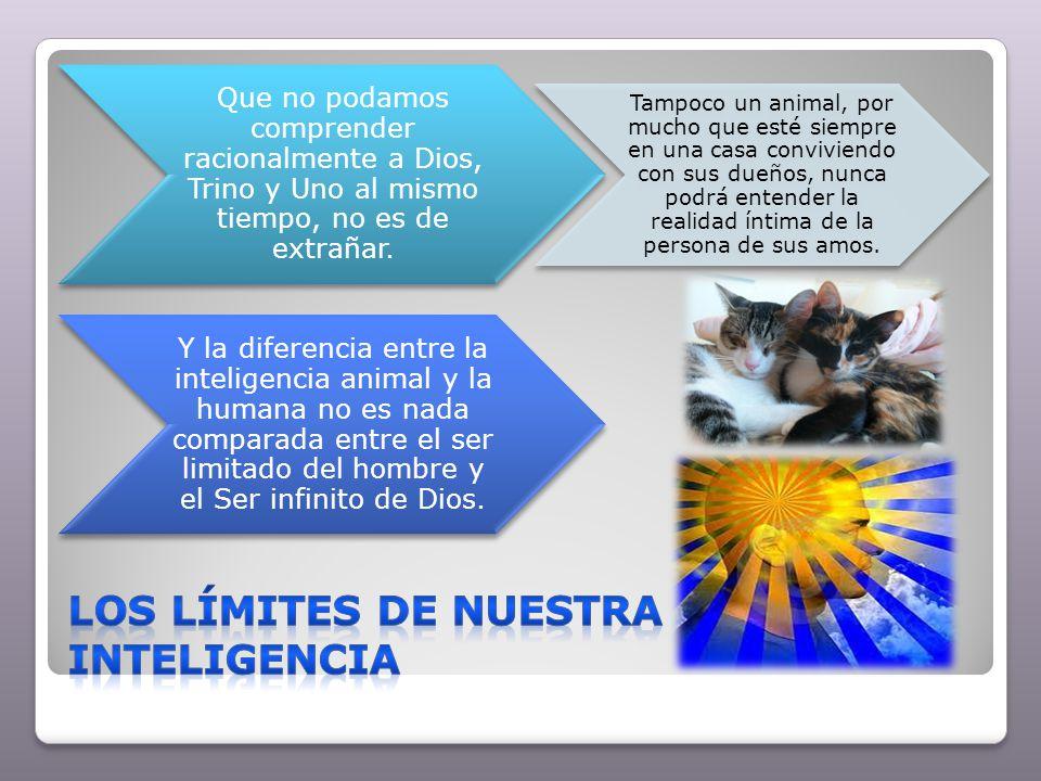 Los límites de nuestra inteligencia