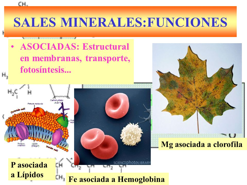 SALES MINERALES:FUNCIONES