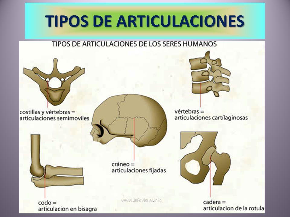 TIPOS DE ARTICULACIONES