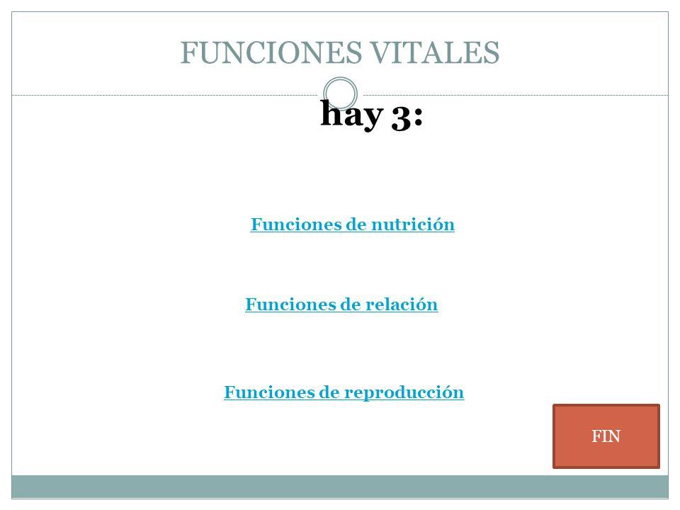 hay 3: FUNCIONES VITALES Funciones de nutrición Funciones de relación