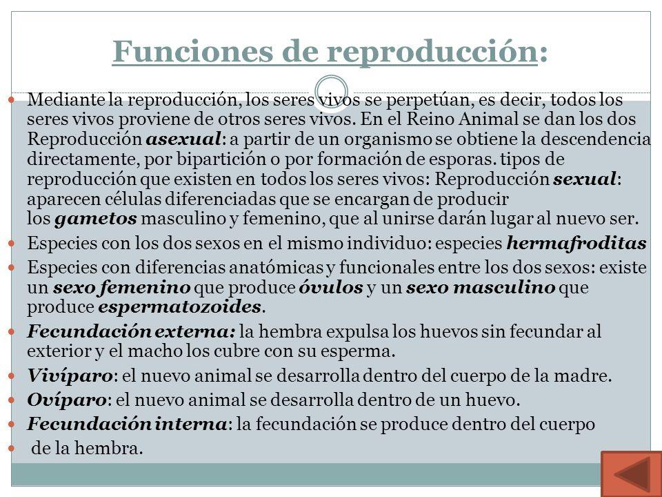 Funciones de reproducción: