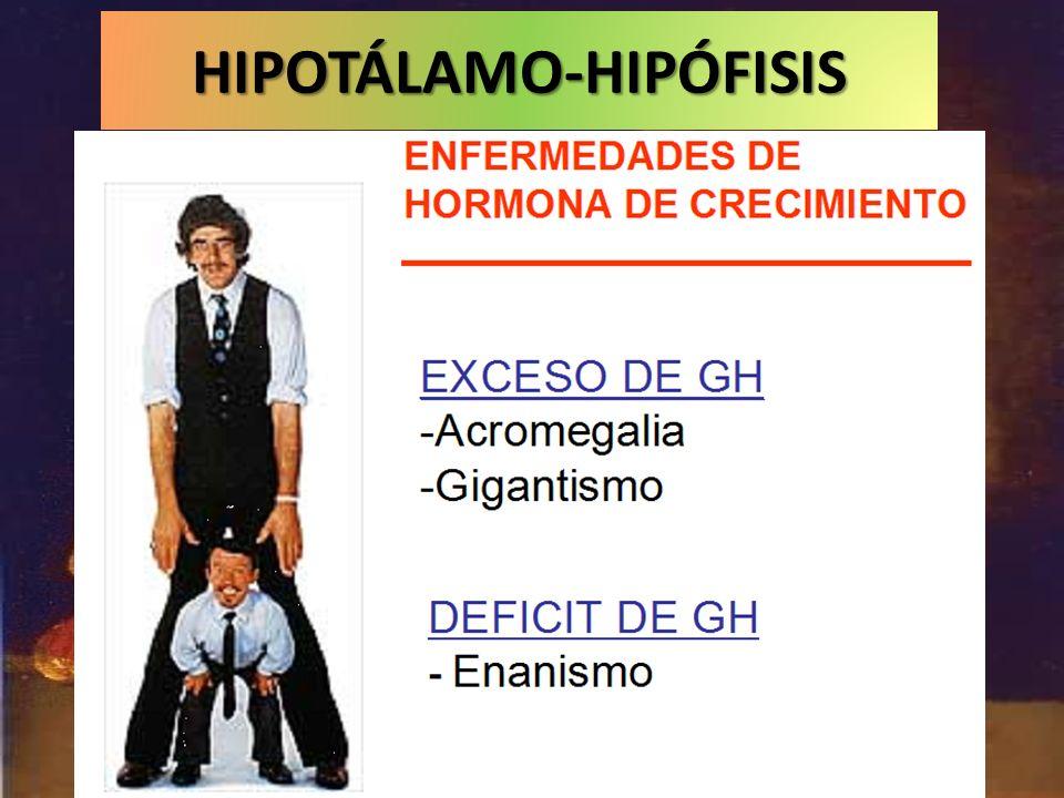HIPOTÁLAMO-HIPÓFISIS