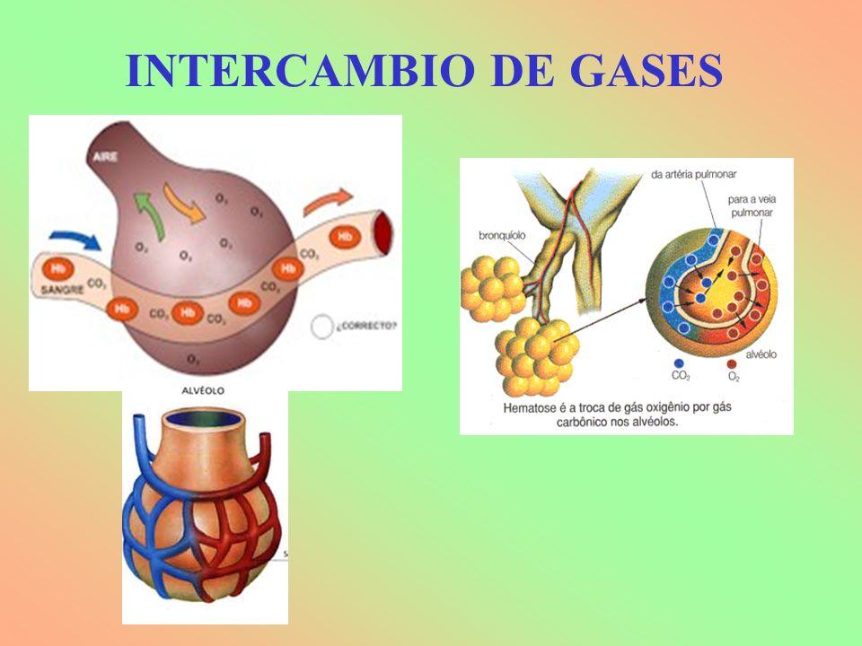 INTERCAMBIO DE GASES