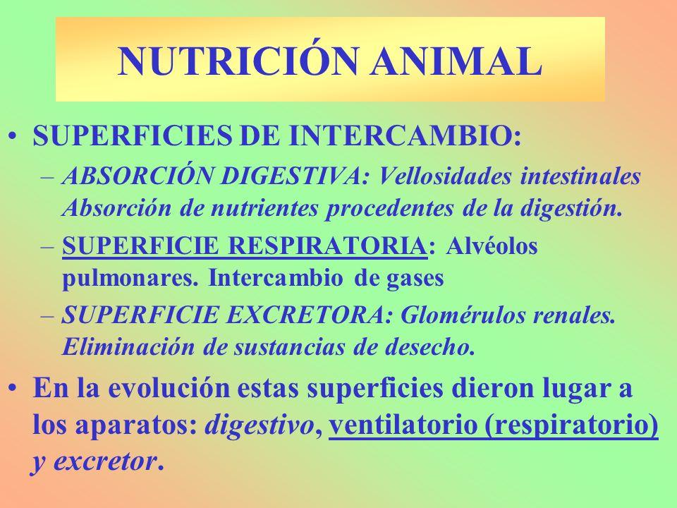 NUTRICIÓN ANIMAL SUPERFICIES DE INTERCAMBIO: