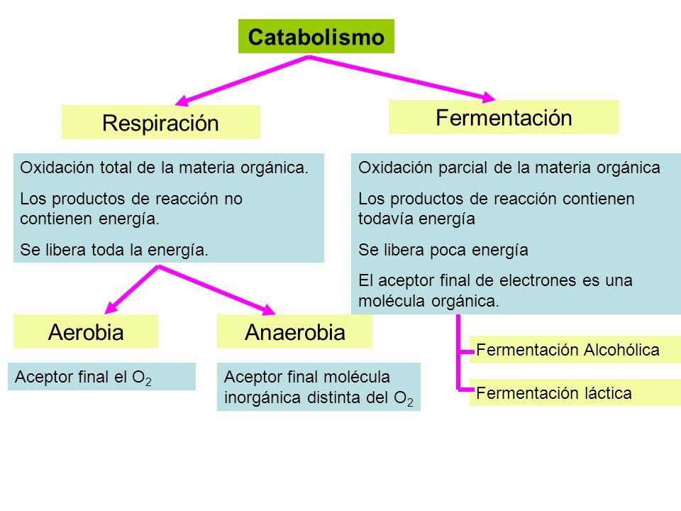 Catabolismo Fermentación Respiración Aerobia Anaerobia