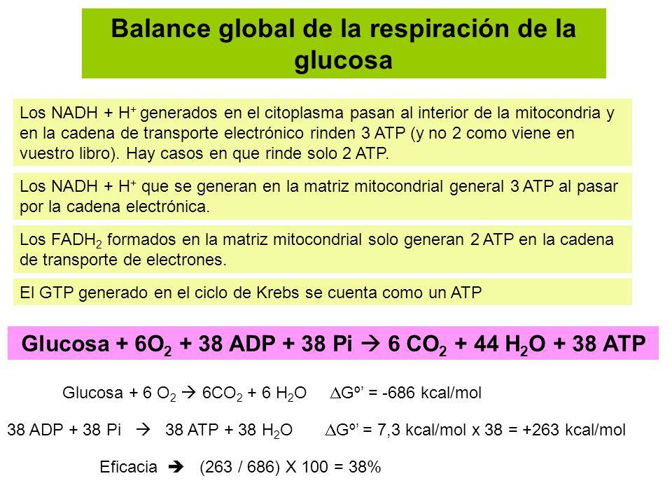 Balance global de la respiración de la glucosa