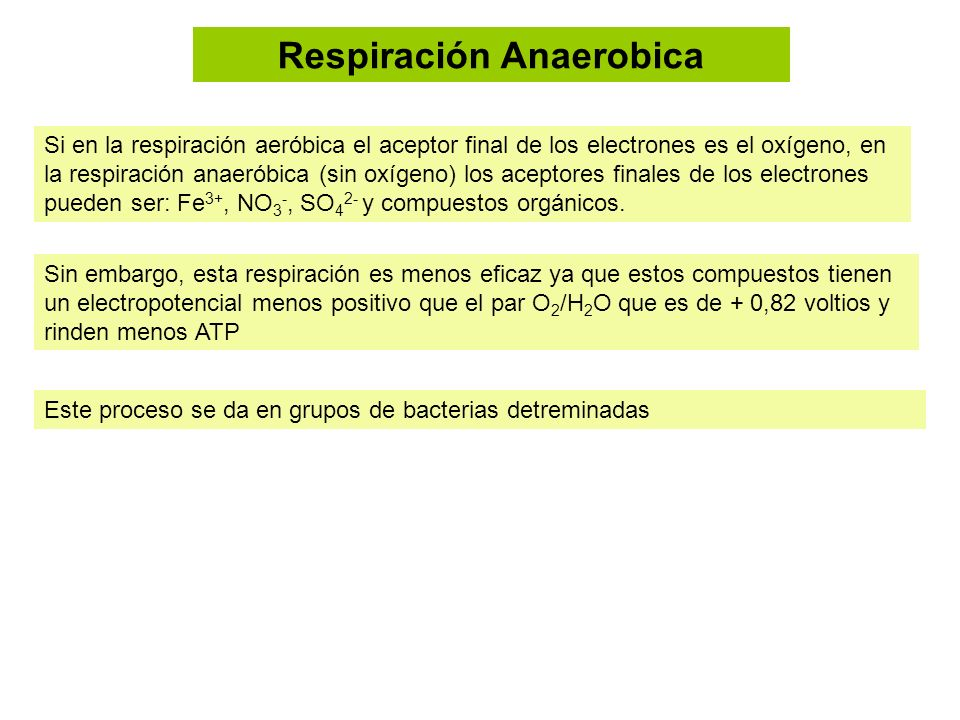 Respiración Anaerobica