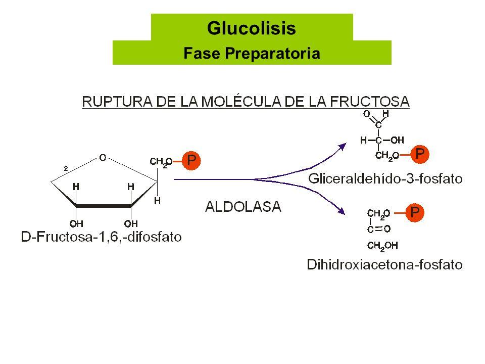 Glucolisis Fase Preparatoria