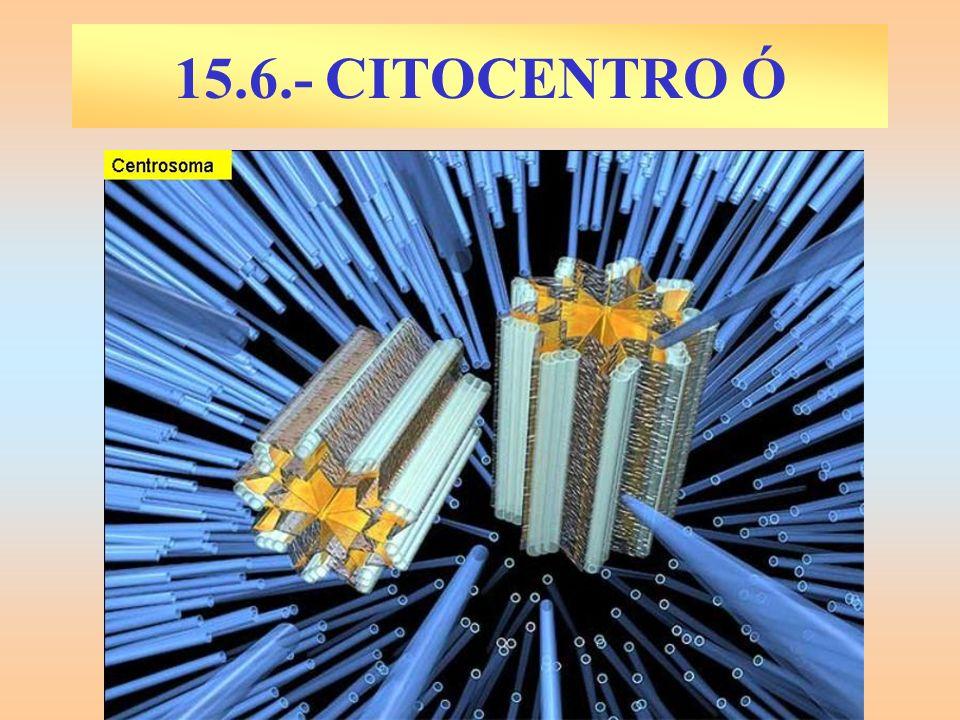 15.6.- CITOCENTRO Ó