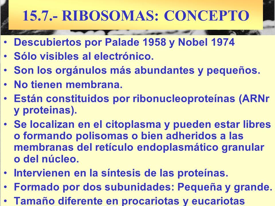 15.7.- RIBOSOMAS: CONCEPTO Descubiertos por Palade 1958 y Nobel 1974