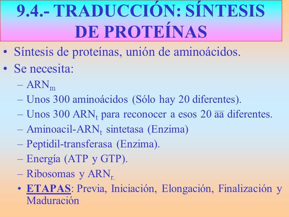 9.4.- TRADUCCIÓN: SÍNTESIS DE PROTEÍNAS