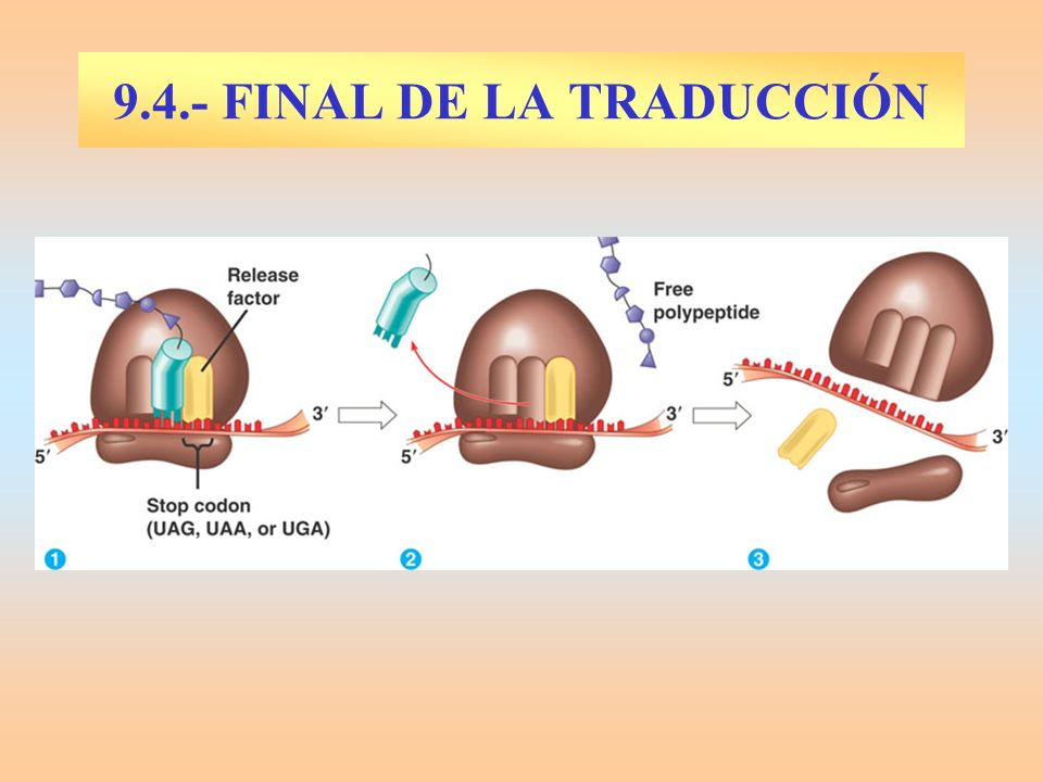 9.4.- FINAL DE LA TRADUCCIÓN