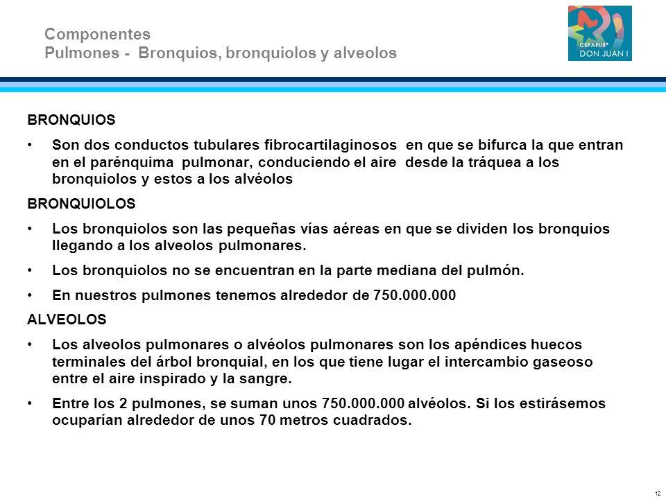 Pulmones - Bronquios, bronquiolos y alveolos