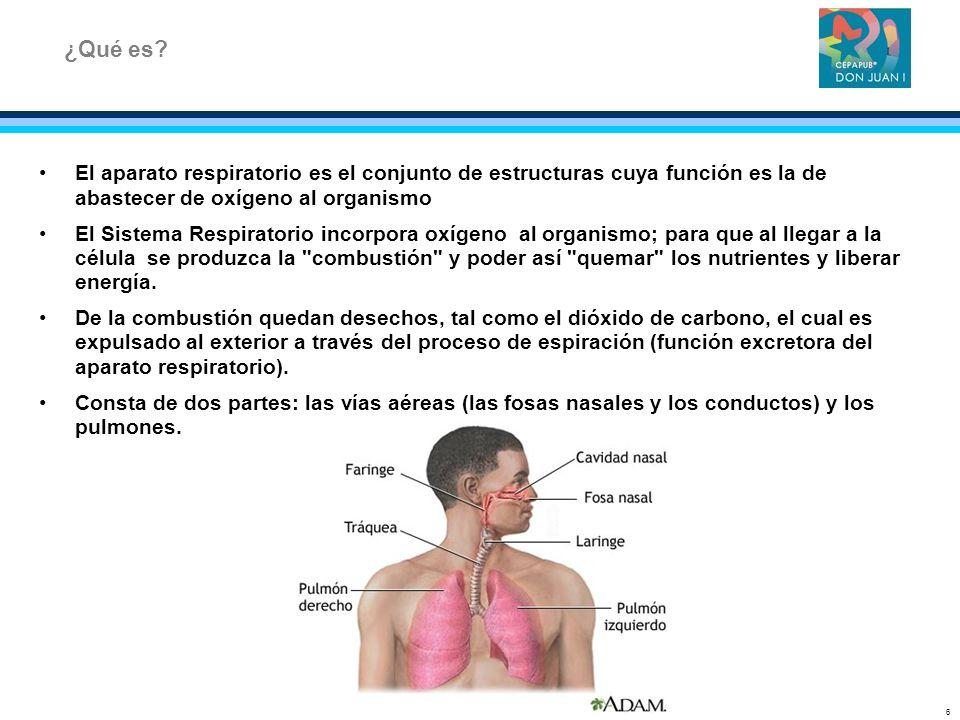 ¿Qué es El aparato respiratorio es el conjunto de estructuras cuya función es la de abastecer de oxígeno al organismo.