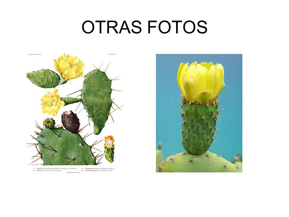 OTRAS FOTOS