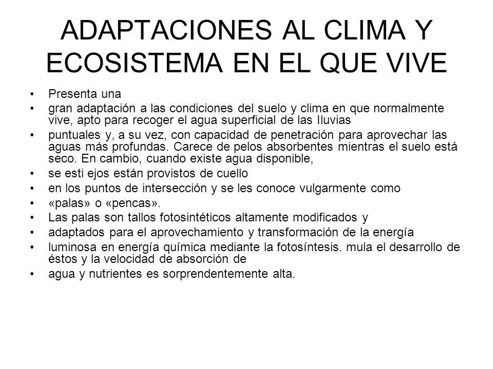 ADAPTACIONES AL CLIMA Y ECOSISTEMA EN EL QUE VIVE