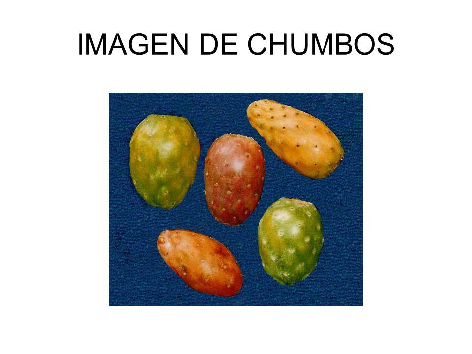 IMAGEN DE CHUMBOS