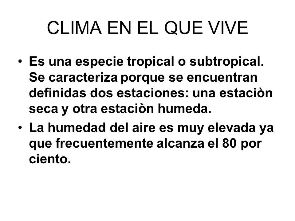 CLIMA EN EL QUE VIVE