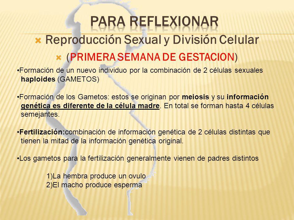 Reproducción Sexual y División Celular (PRIMERA SEMANA DE GESTACION)