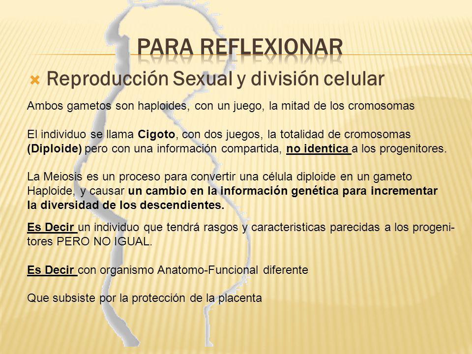Para reflexionar Reproducción Sexual y división celular