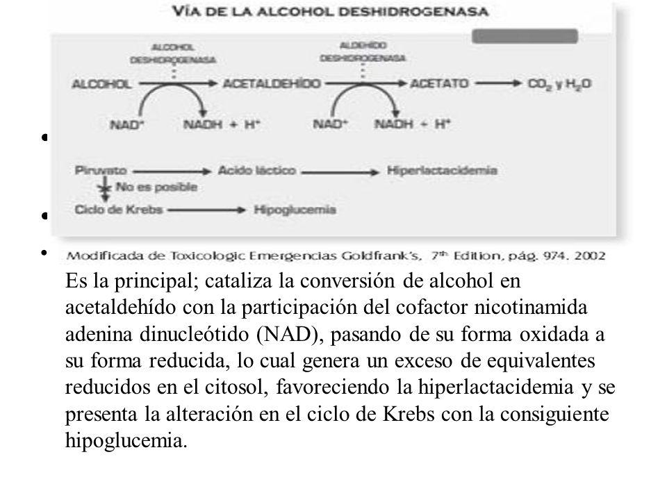 1. La vía de la enzima alcohol deshidrogenasa: