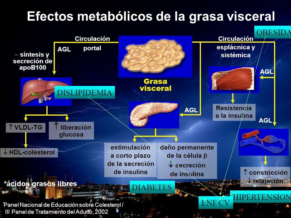 Efectos metabólicos de la grasa visceral  constricción  relajación