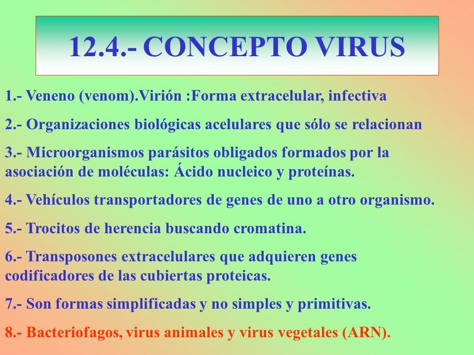 12.4.- CONCEPTO VIRUS 1.- Veneno (venom).Virión :Forma extracelular, infectiva. 2.- Organizaciones biológicas acelulares que sólo se relacionan.
