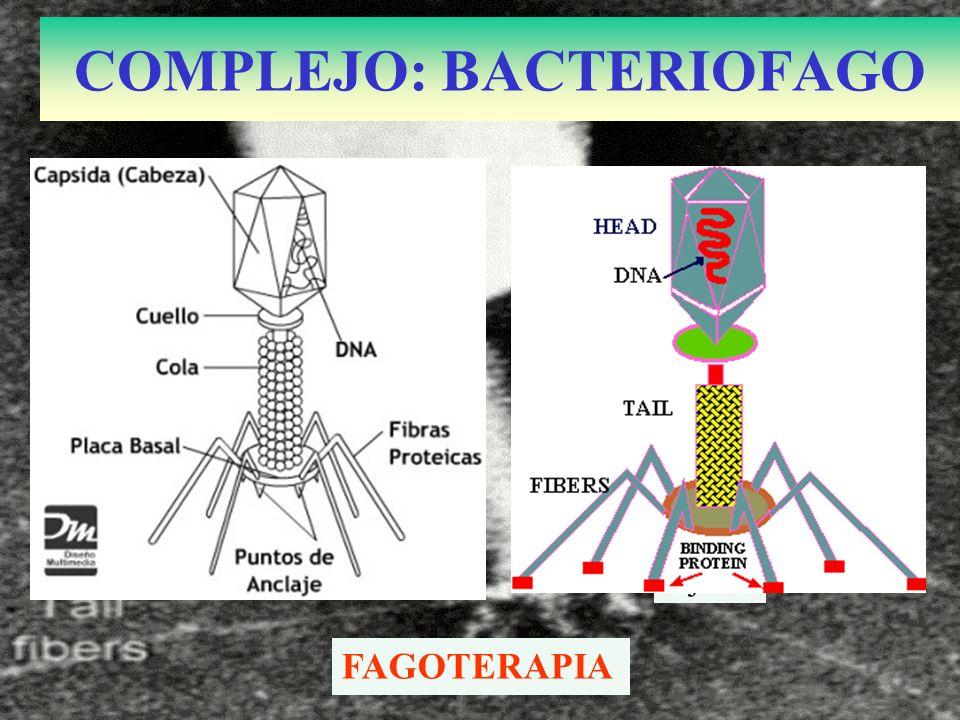 COMPLEJO: BACTERIOFAGO