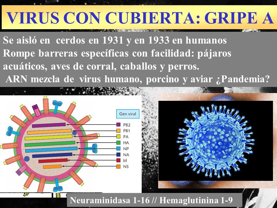 VIRUS CON CUBIERTA: GRIPE A