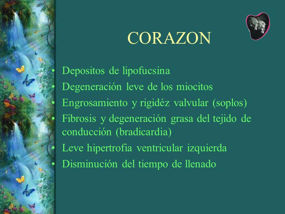 CORAZON Depositos de lipofucsina Degeneración leve de los miocitos