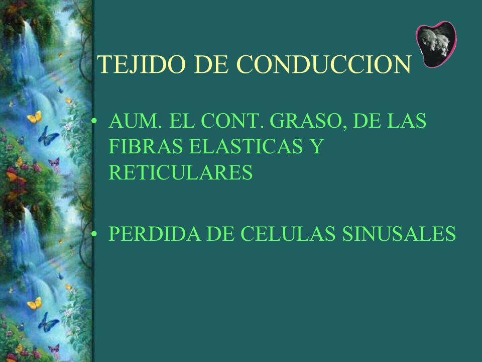TEJIDO DE CONDUCCION AUM. EL CONT. GRASO, DE LAS FIBRAS ELASTICAS Y RETICULARES.