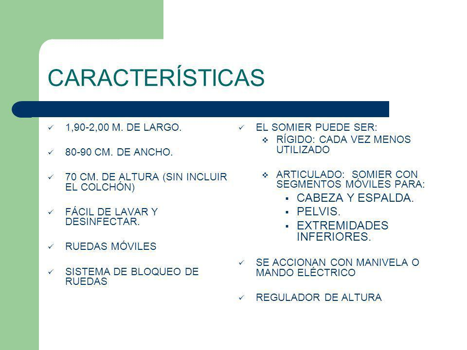 CARACTERÍSTICAS CABEZA Y ESPALDA. PELVIS. EXTREMIDADES INFERIORES.
