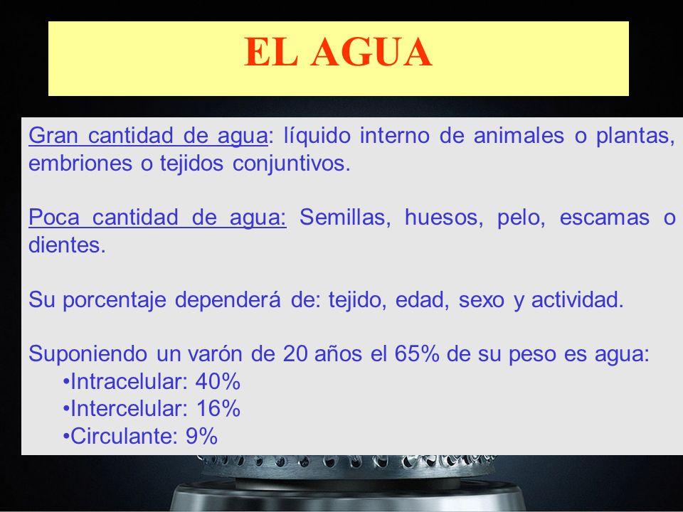 EL AGUA Gran cantidad de agua: líquido interno de animales o plantas, embriones o tejidos conjuntivos.