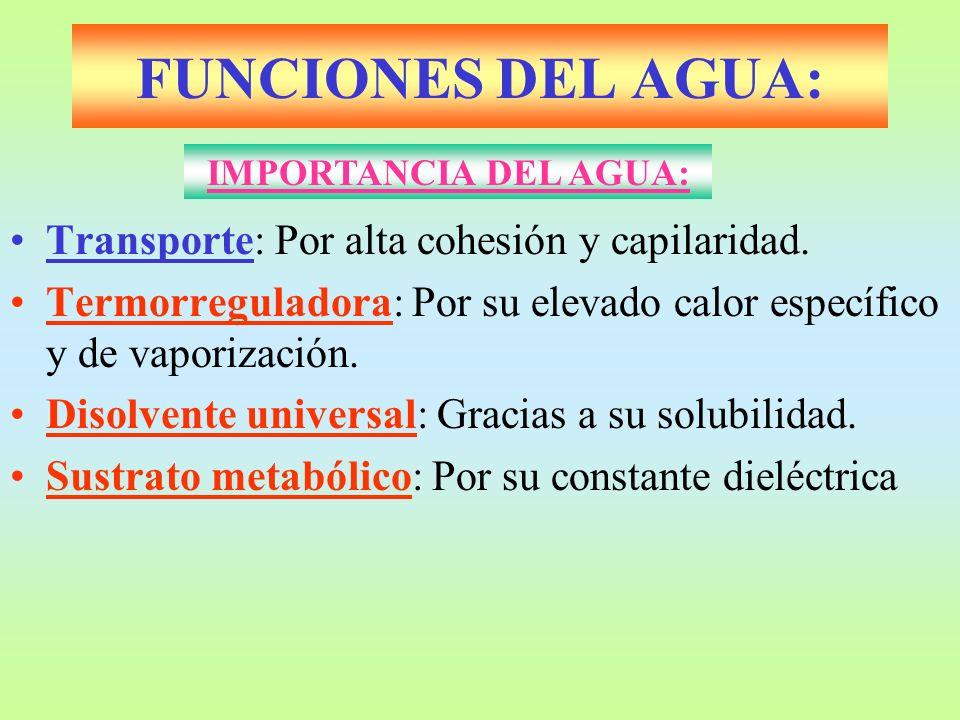 FUNCIONES DEL AGUA: Transporte: Por alta cohesión y capilaridad.