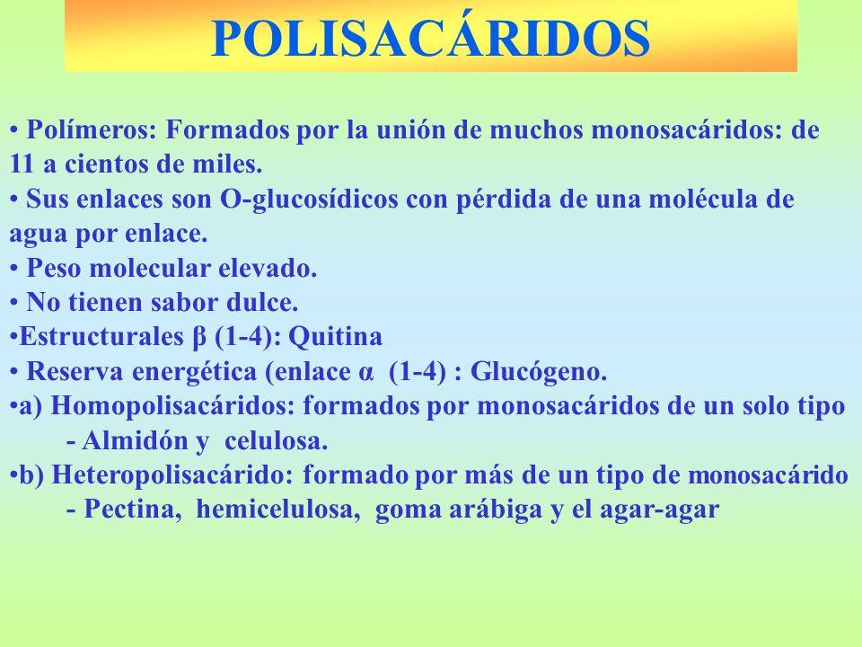 POLISACÁRIDOSPolímeros: Formados por la unión de muchos monosacáridos: de 11 a cientos de miles.