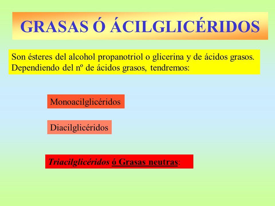GRASAS Ó ÁCILGLICÉRIDOS