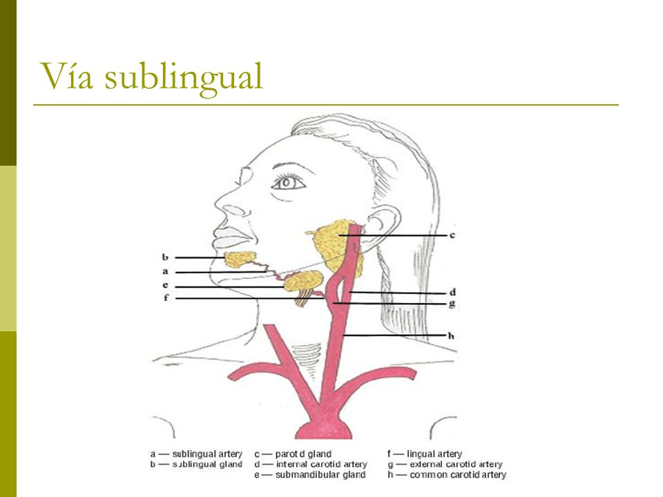 Vía sublingual
