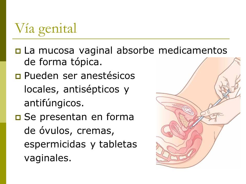 Vía genital La mucosa vaginal absorbe medicamentos de forma tópica.