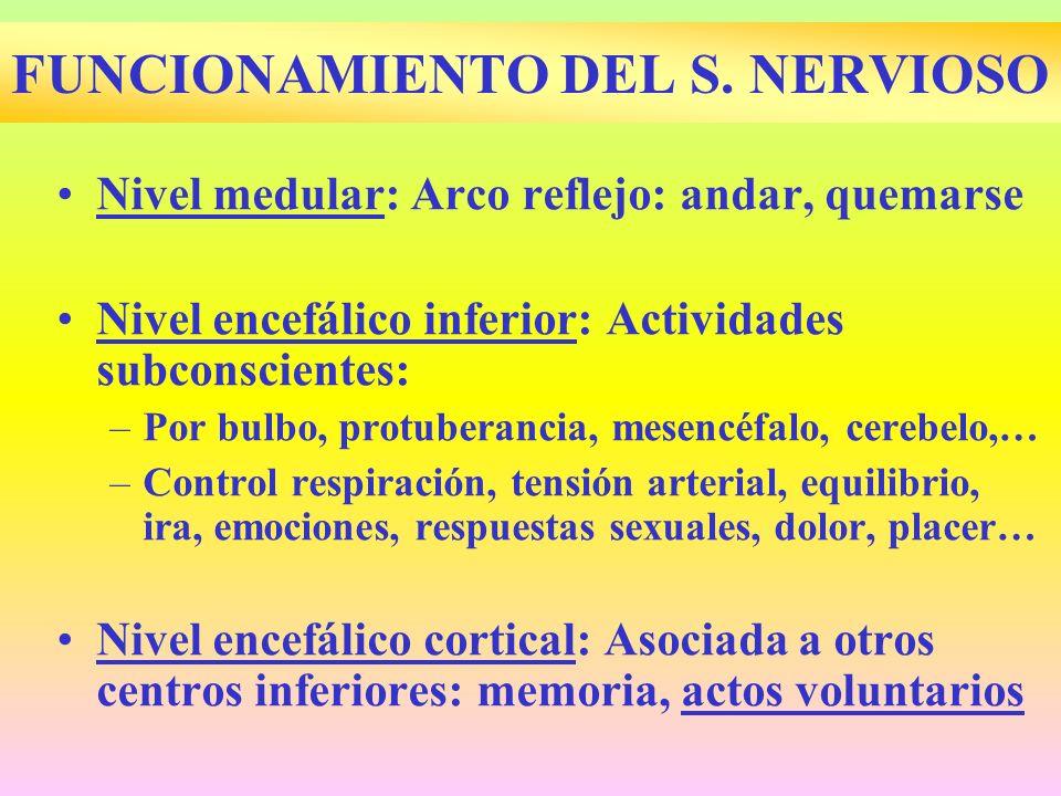 FUNCIONAMIENTO DEL S. NERVIOSO