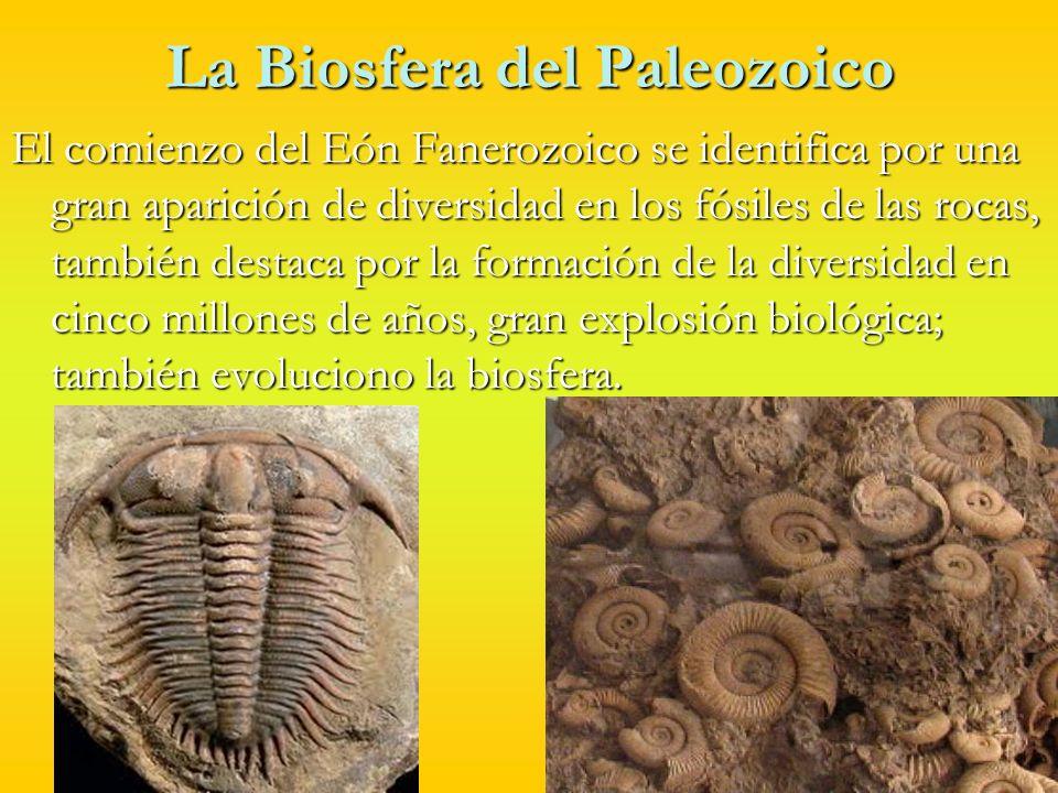 La Biosfera del Paleozoico