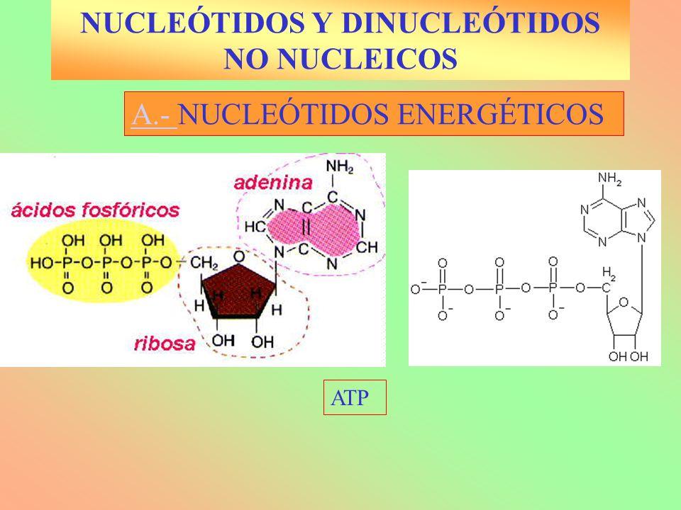 NUCLEÓTIDOS Y DINUCLEÓTIDOS NO NUCLEICOS