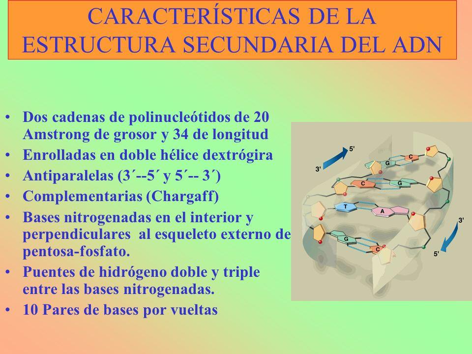 CARACTERÍSTICAS DE LA ESTRUCTURA SECUNDARIA DEL ADN